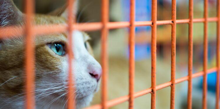 Comment devenir famille d'accueil pour chats abandonnés