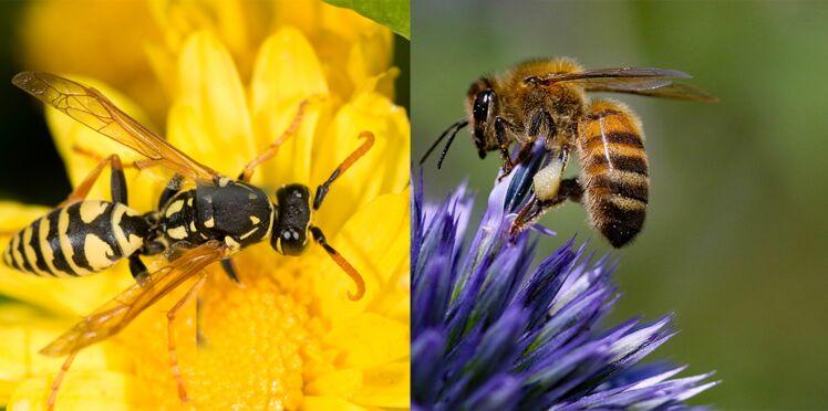 Comment distinguer une guêpe d'une abeille ?