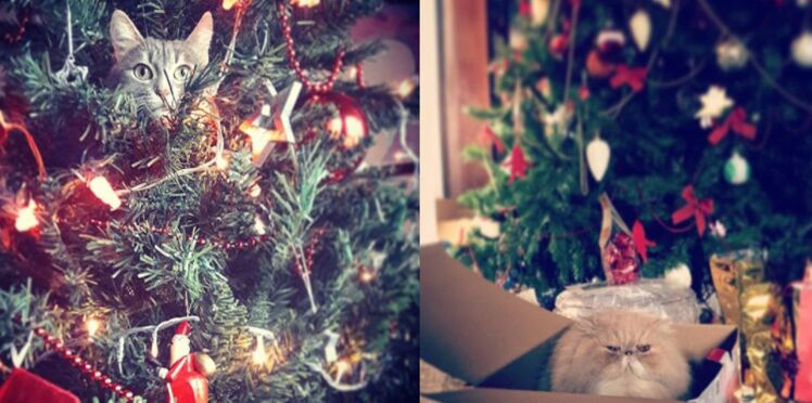 Les chats fous des sapins de Noël