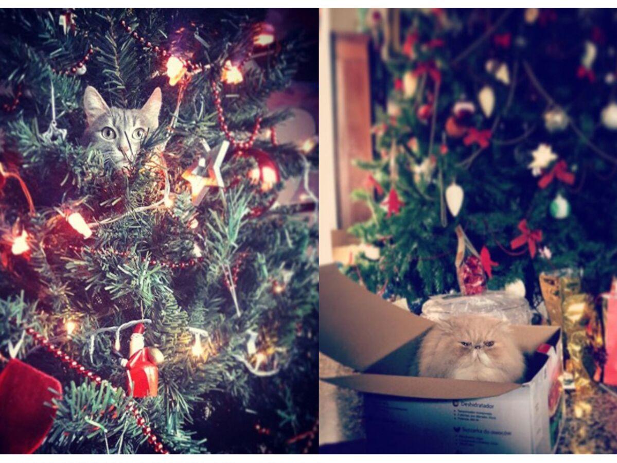 Comment Fixer Un Sapin De Noel comment empêcher votre chat de détruire votre sapin de noël
