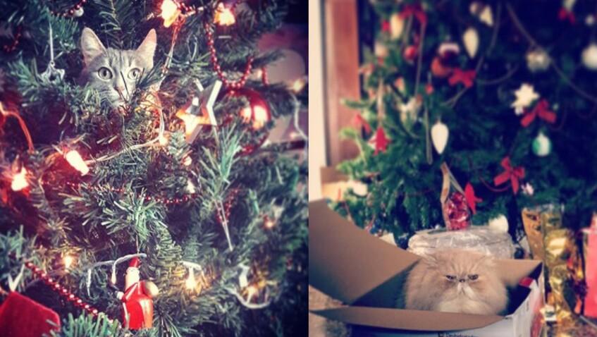 Comment empêcher votre chat de détruire votre sapin de Noël ?