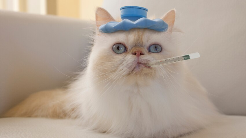 Comment prendre la température de son chat ?