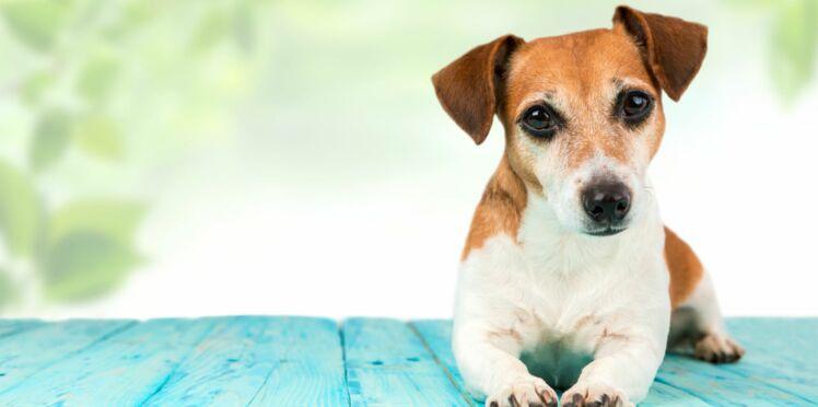 Comment préparer la mise bas de ma chienne ?