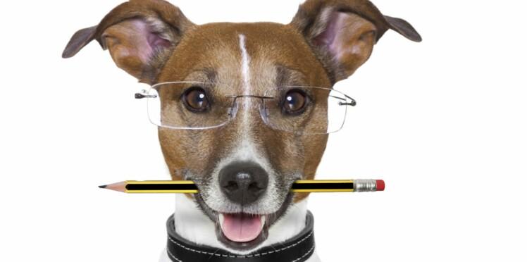 Comment savoir si mon chien est intelligent ?