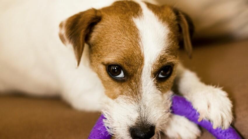 Comment stimuler son chien à la maison?