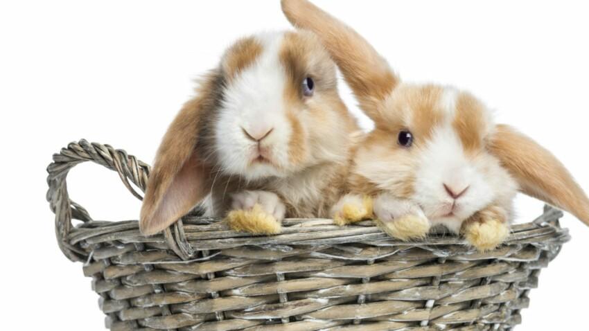 Comment décrypter le comportement de mon lapin