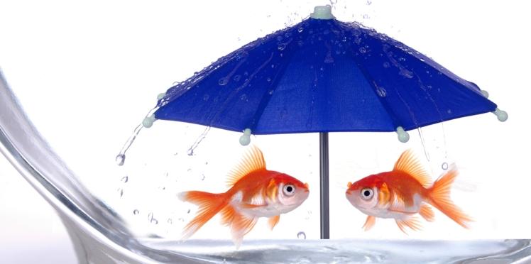 Je veux un super aquarium !