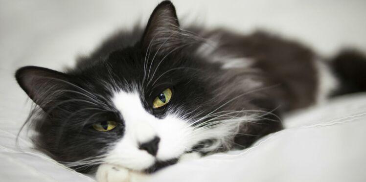 10 conseils pour adopter le bon chat
