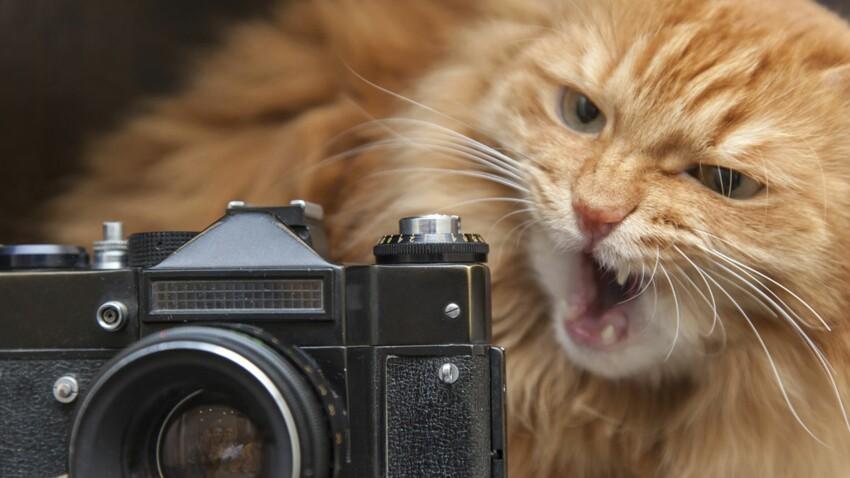 5 conseils pour photographier son chat