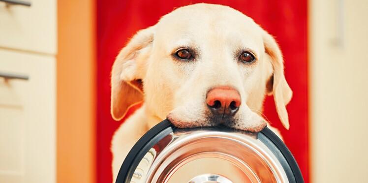 Croquettes, boîtes, produits frais… Comment bien nourrir son animal ?