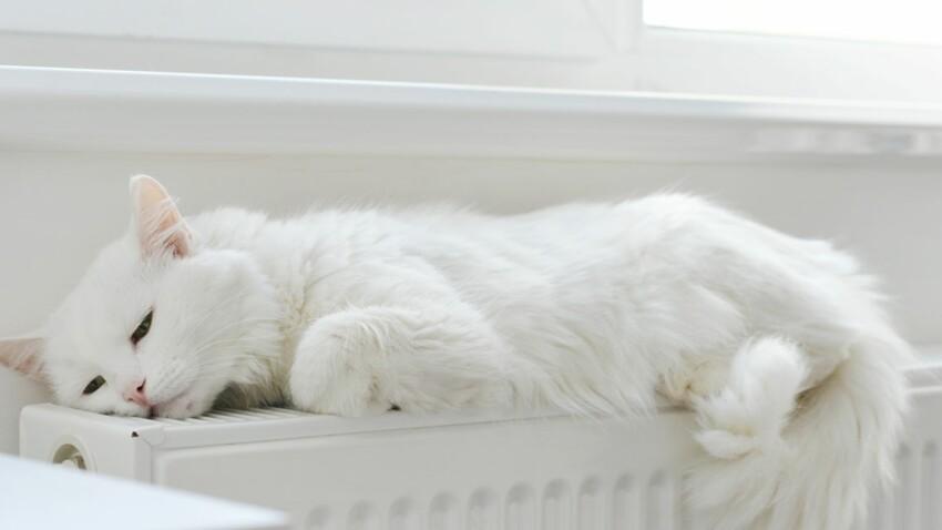 Déménagement, travaux, bébé : comment préparer son chat au changement ?