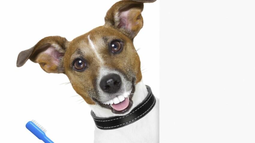 Comment prendre soin des dents de mon chien ?