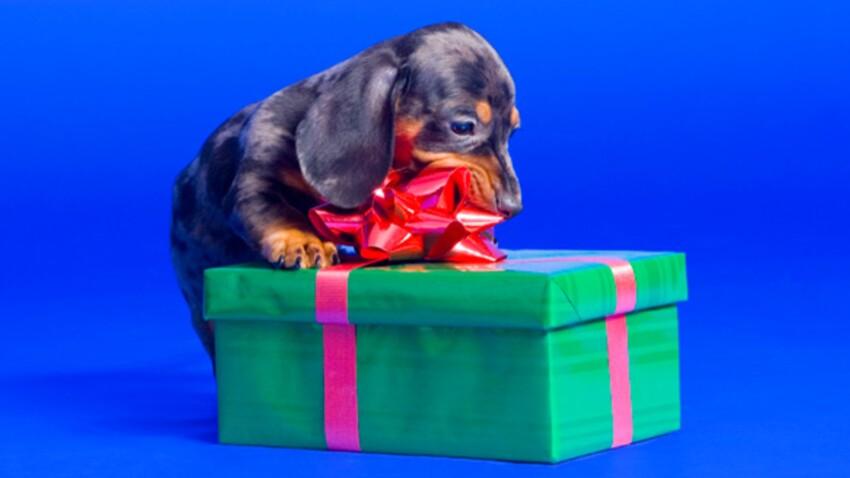 Des idées cadeaux pour vos animaux