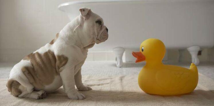 Des jouets pour votre chien