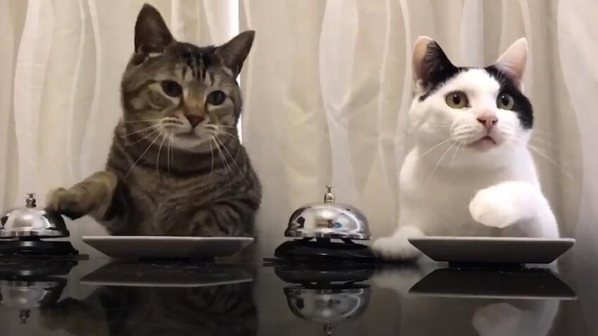 Quand deux chats activent des sonnettes pour manger leurs croquettes