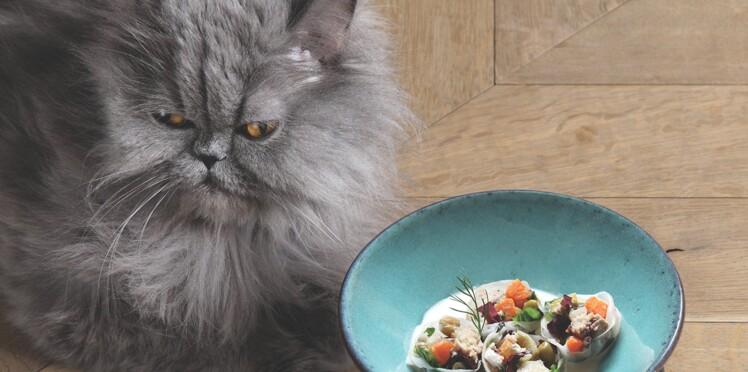 Deux recettes de fête pour mon chat