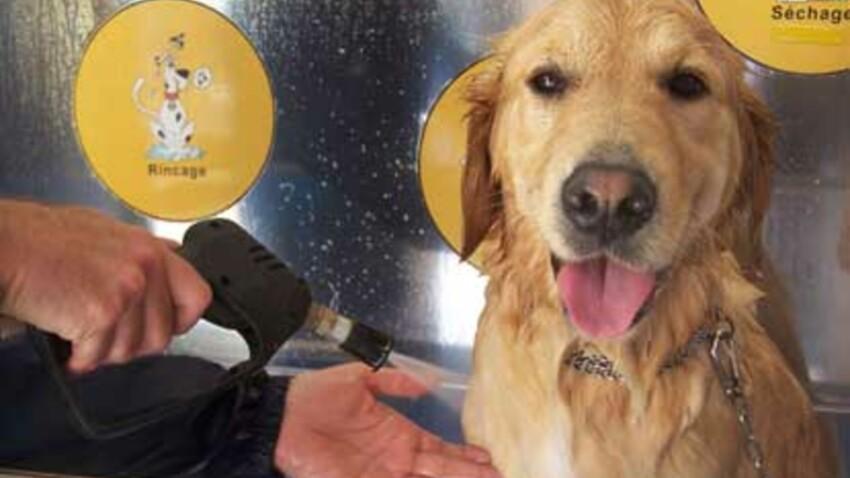 Douche publique pour chiens