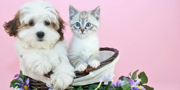 En 2018 les prénoms des chiens et des chats commencent par la lettre O