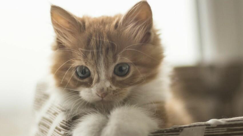 Au secours, mon enfant veut un chat !