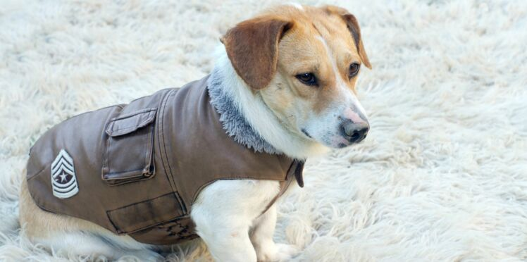 Faut-il habiller son chien en hiver ?