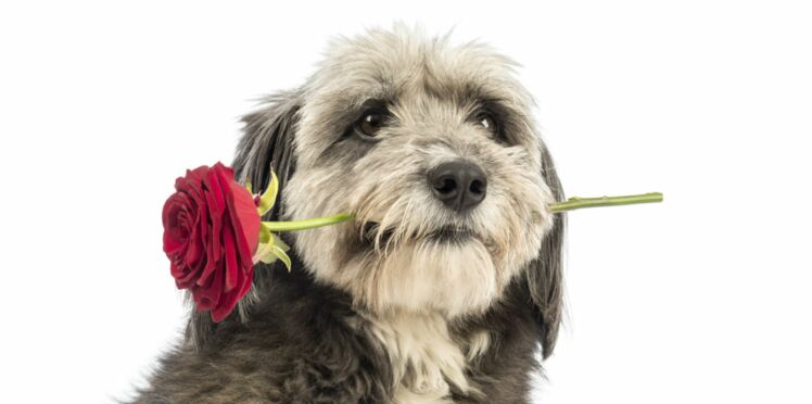 Comment trouver le fiancé idéal pour ma chienne