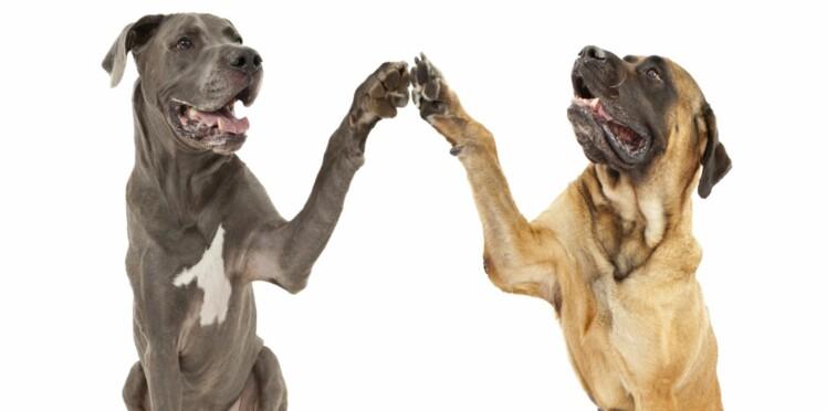 Un grand chien en appartement, est-ce que ça fonctionne ?