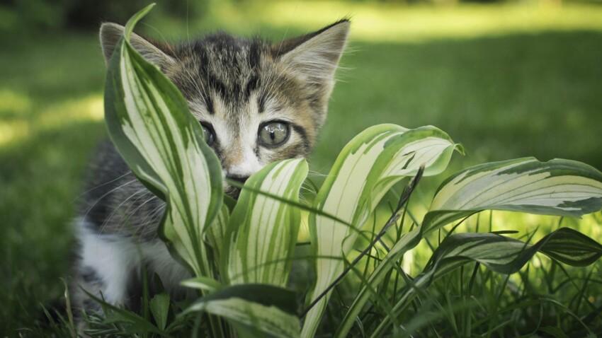 Les bonnes et les mauvaises herbes pour nos chats