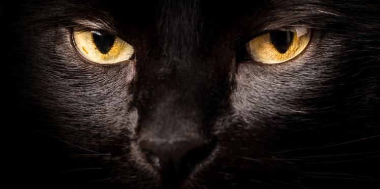 Horoscope de votre chat : découvrez son caractère