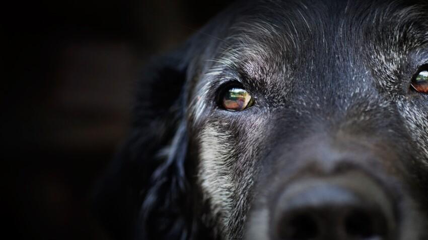 Horoscope de votre chien : découvrez son caractère