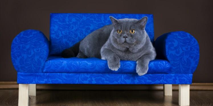 L'appartement de rêve pour votre chat