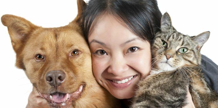 La garde alternée pour chiens et chats, est-ce une bonne idée ?