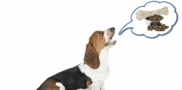 Décodez le langage de votre chien