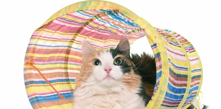 Le cat-agility, une activité sympa pour votre chat