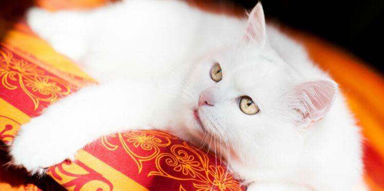 Le chat, notre animal préféré