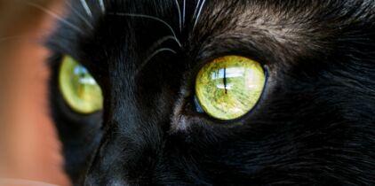 Chatte noire obtient léché