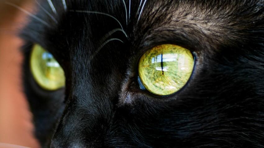 Le chat, un animal mystérieux