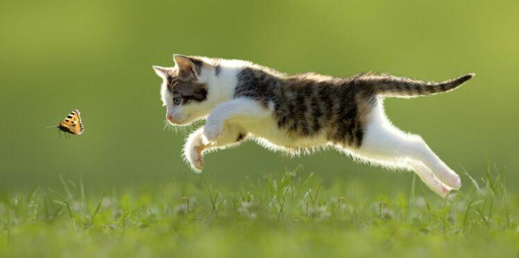 Le corps du chat a des super pouvoirs !