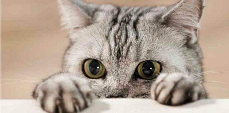 Le livre sur les chats qui va vous faire craquer