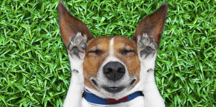 Le sommeil du chien en 10 questions