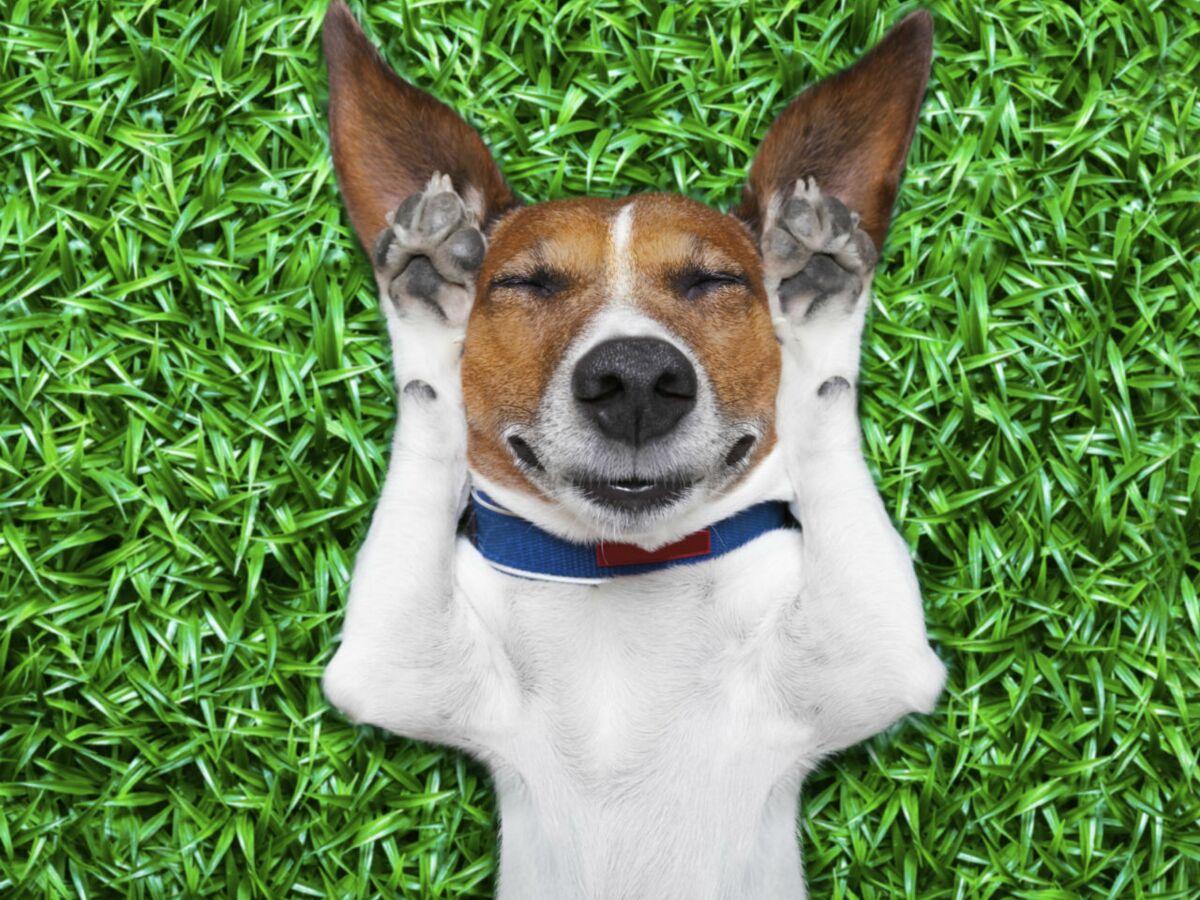 Chien Fait Ses Besoins La Nuit le sommeil du chien en 10 questions : femme actuelle le mag