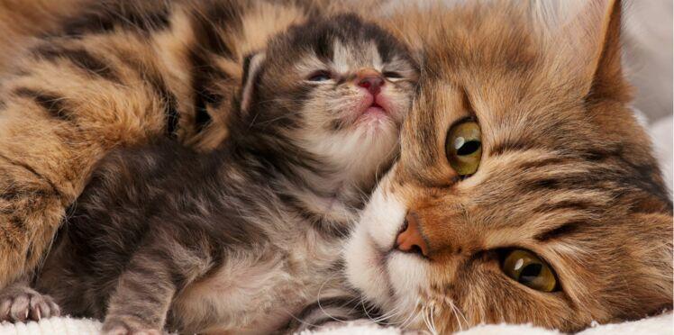 Les 15 étapes du développement du chat