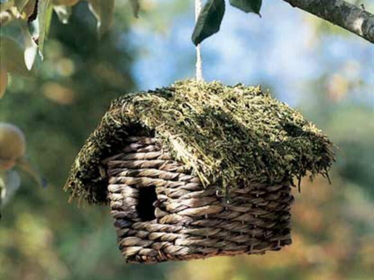 oiseaux un abris pour l 39 hiver femme actuelle le mag. Black Bedroom Furniture Sets. Home Design Ideas
