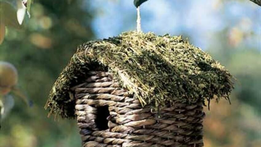 Oiseaux : un abris pour l'hiver