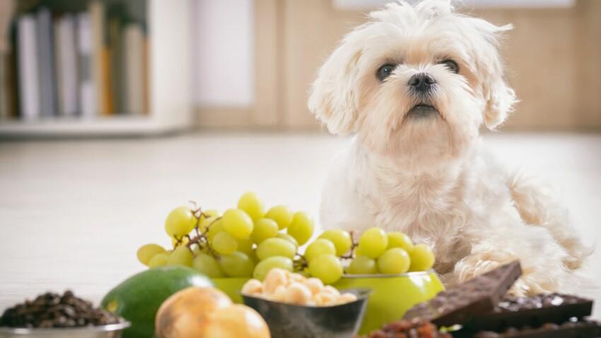 Quels sont les 10 aliments les plus dangereux pour vos chiens et chats ?