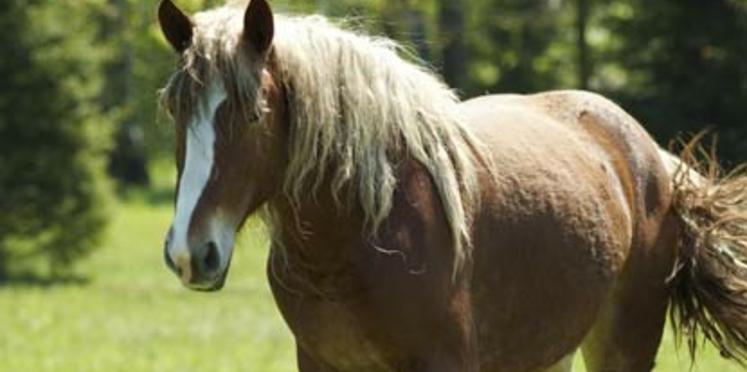 Les chevaux en photos