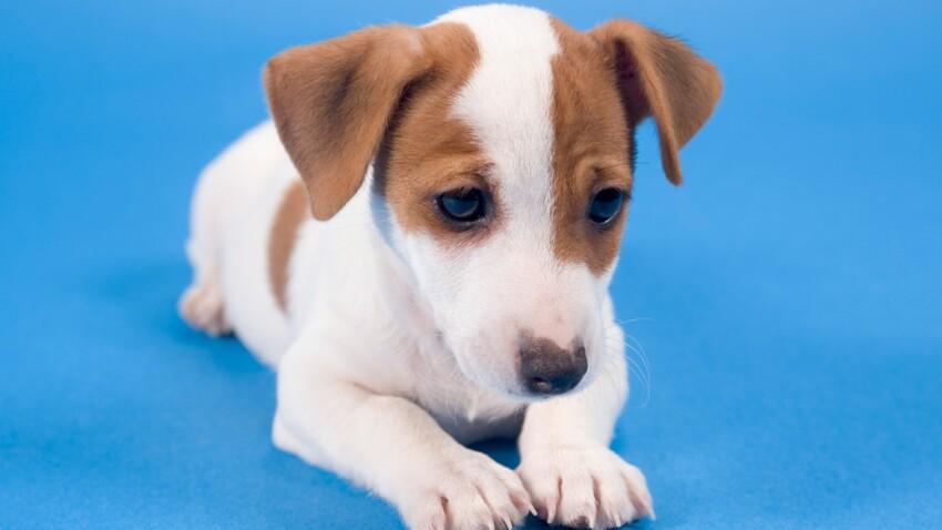 Noms de chiens : 2013, l'année du I