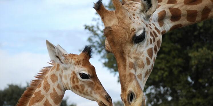 Les plus beaux zoos de France