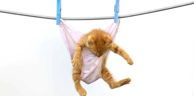 LOLCATS : les vidéos de chats les plus poilantes !