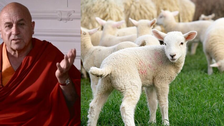 Video : pour Matthieu Ricard, le veganisme, c'est le secret du bonheur