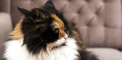 à peine adolescent chatte extrêmement serré chatte vidéos